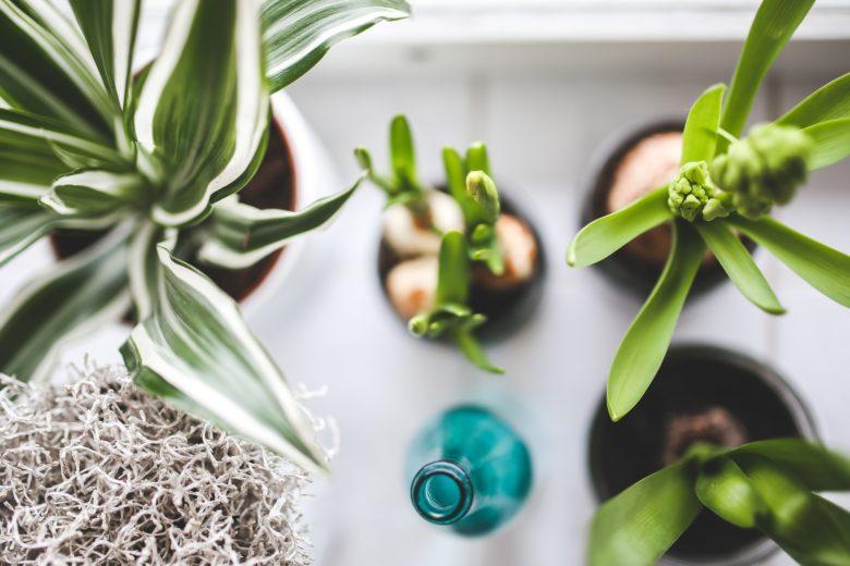 zijn planten in huis gezond